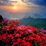china-46redflowers1